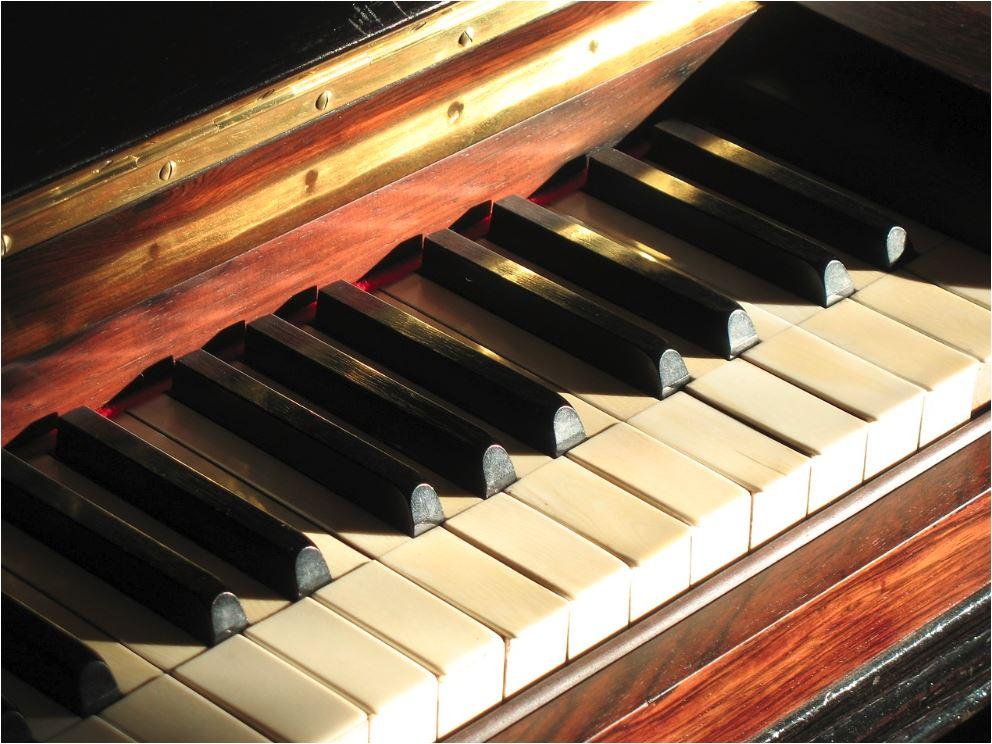 ¿Sabías que muchas teclas de pianos se hacen con marfil?