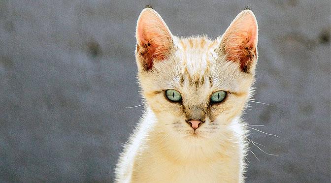Conductas felinas de tu gato que quiere que sepas.