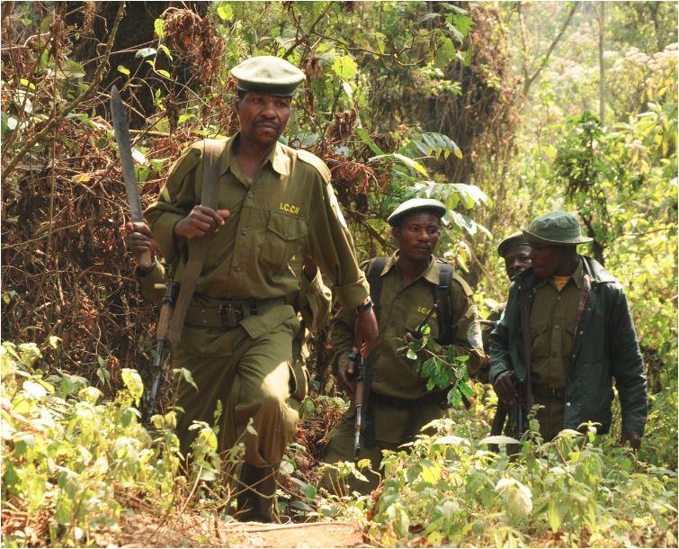 La ONU ha declarado recientemente que todas las partes del conflicto civil tienen que ver con la minería y venta de coltán. Imagen: A.J.Plumptre/WCS.