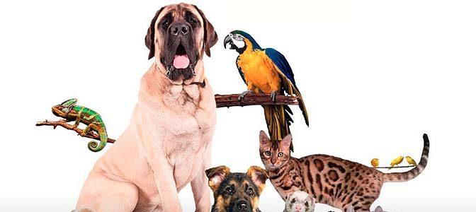 Nueva colaboradora de veterinaria.